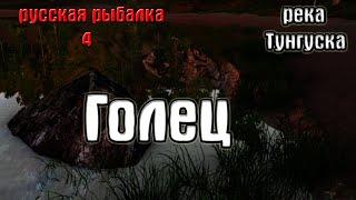 Русская рыбалка 4 рр4 rf4 река Нижняя тунгуска Голец