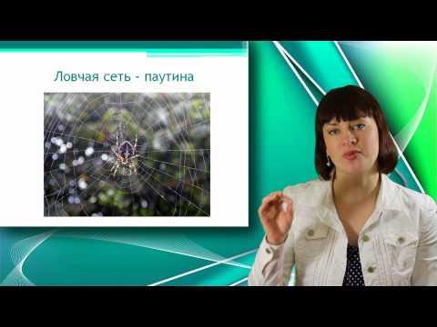 Паук крестовик: описание жизни паука с фото, а также
