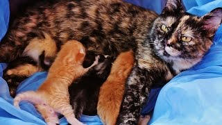 чудесатые рыжие котики и их волшебная история :)