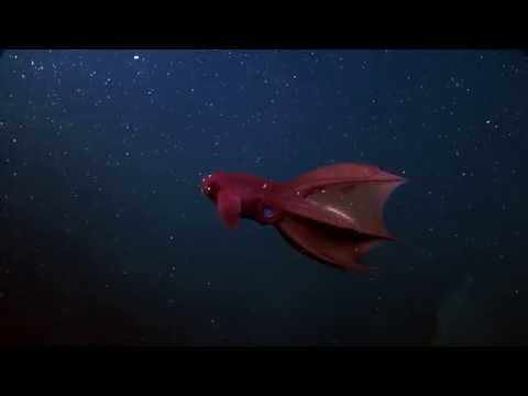 The Vampire Squid From Hell