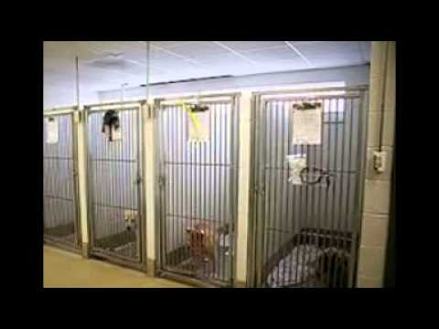 Boarding Dog Kennels Youtube