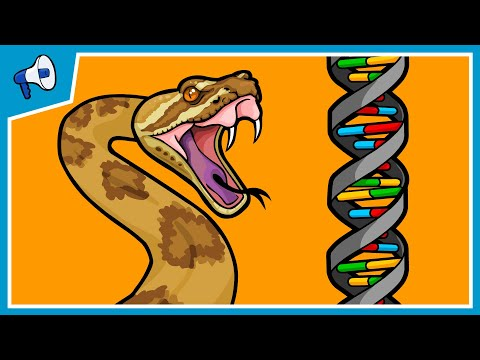 Part 2: How Does New Genetic Information Evolve? Gene Duplications