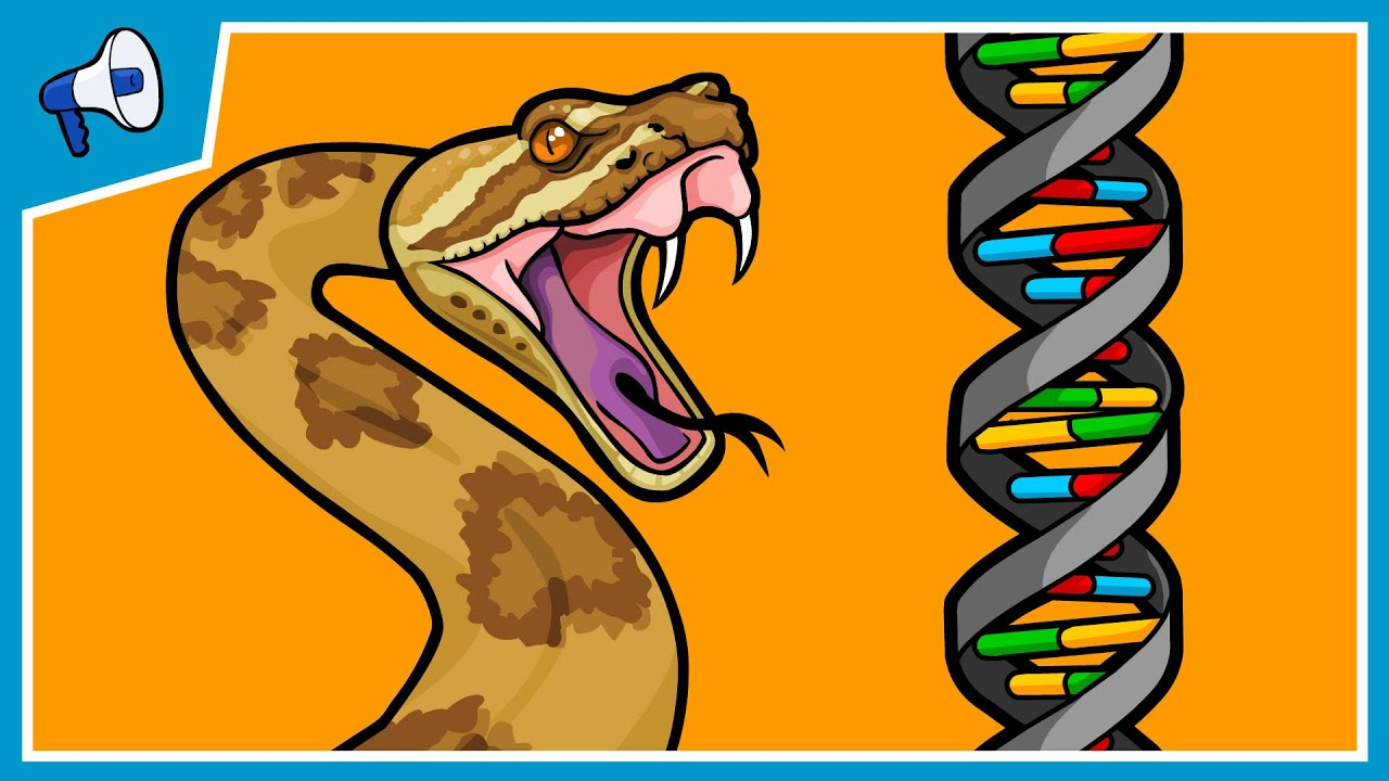 WSU Scientist Working on a CRISPR Way to Bacon