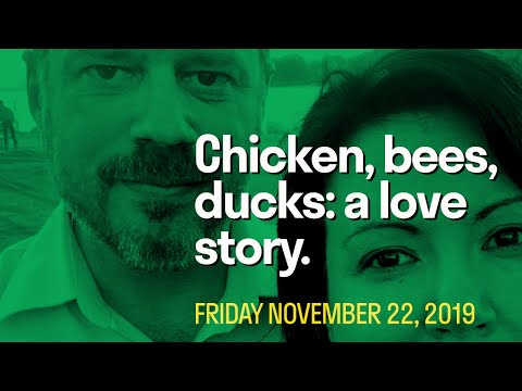 [Daily Live] Chickens, Bees, Ducks: a Twisted Love Story.