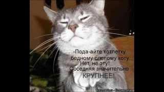 Смешные собаки и кошки (Фото) ч.2