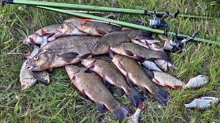 Крупный ЛЕЩ и ЛИНЬ на ПОПЛАВОК в камышах рыбалка на удочку на пруду