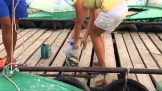 Рыболовные путешествия:  Волжский трофей-2 2009(, 2013-04-10T06:48:35.000Z)