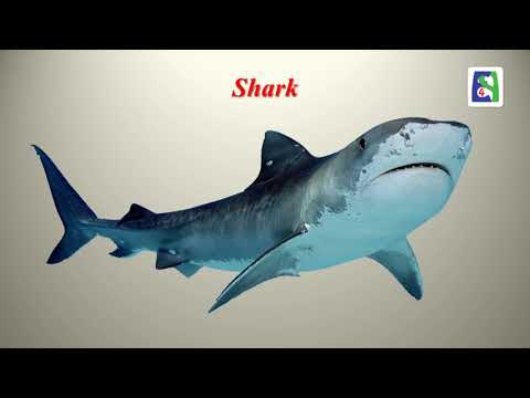 Sea animals Part 1