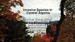Healthy Habits for Healthy Habitats: Invasive Species
