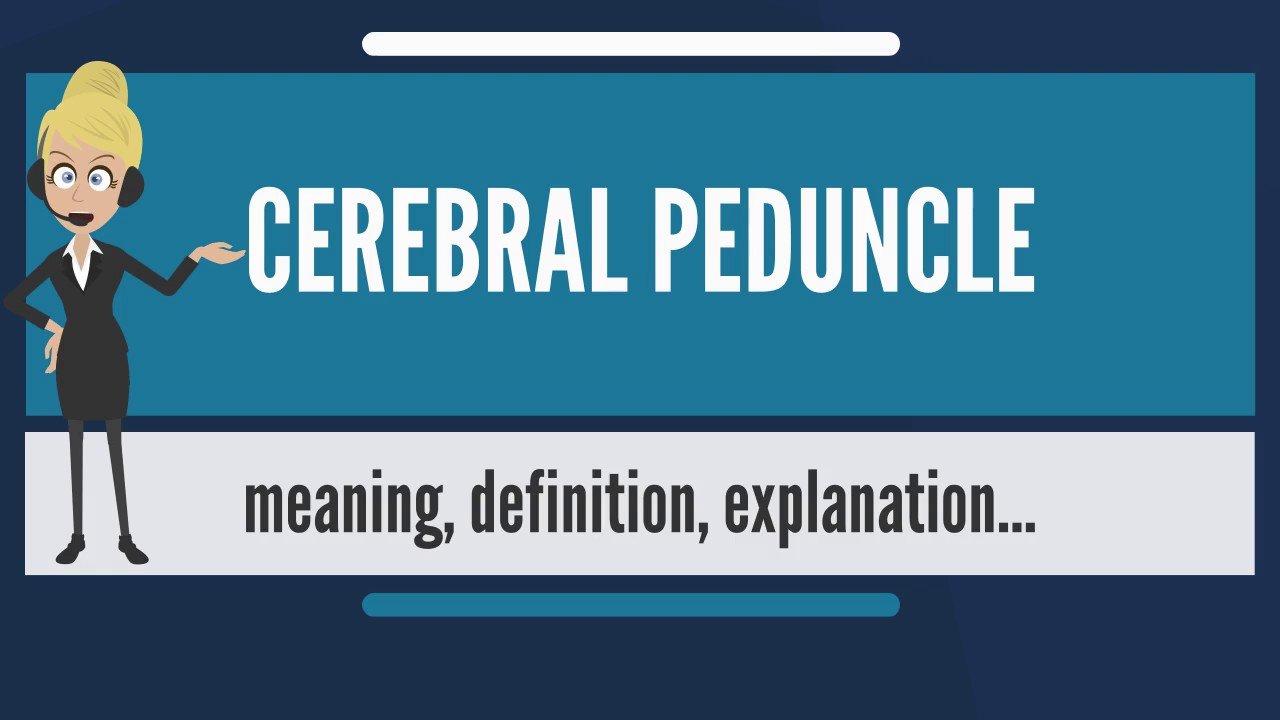 What is CEREBRAL PEDUNCLE? What does CEREBRAL PEDUNCLE mean ...