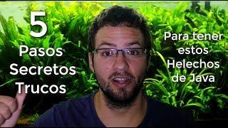 5 TRUCOS para TENER estos HELECHOS DE JAVA || AquaTips