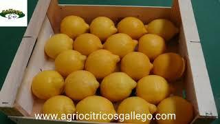 AGRIOCITRICOS HERMANOS GALLEGO sl.Limones de España