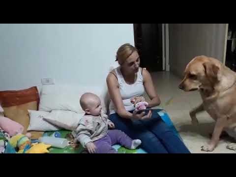 Cuento Para Angelina Y Lola!!! #cuento #cuento Infantil #Angelina  #mama Lee Un Cuento #labradora