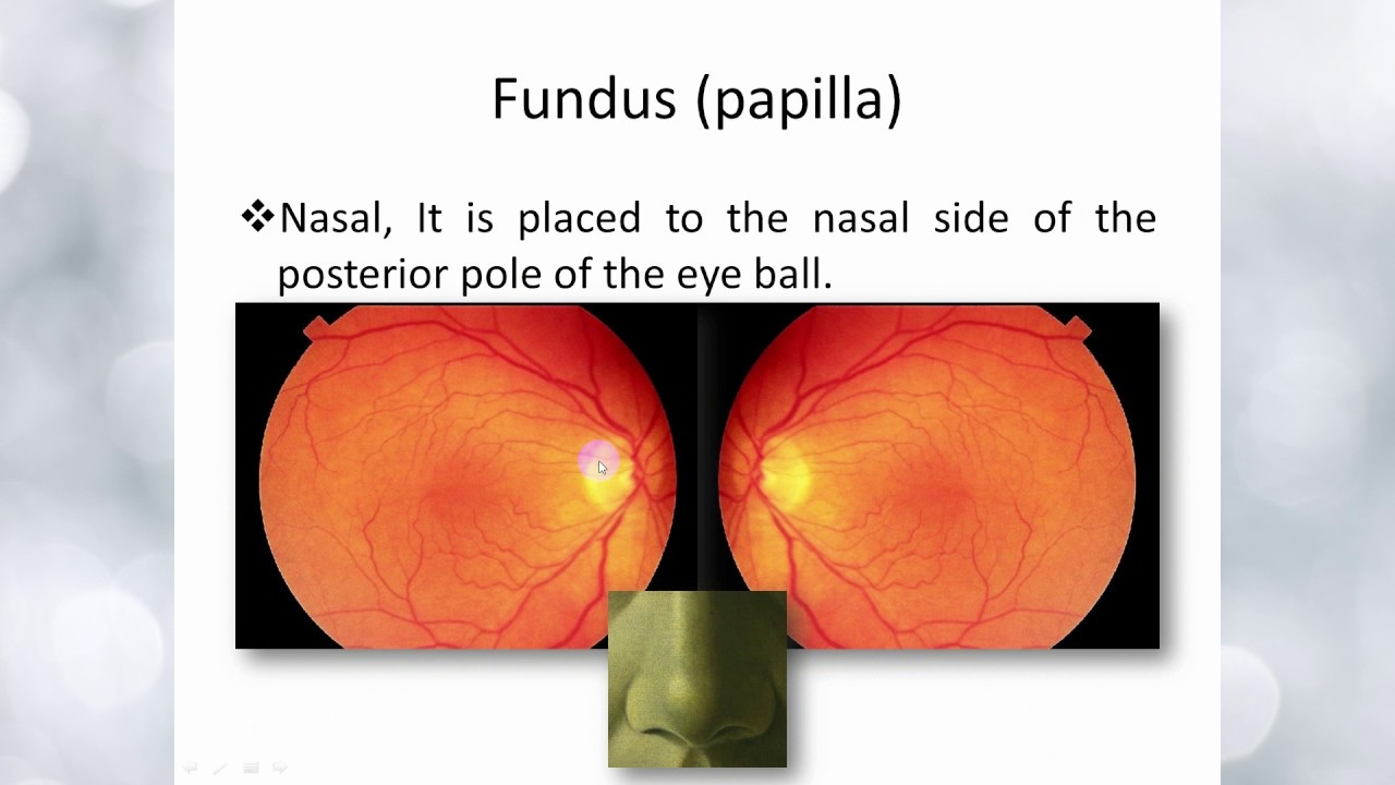 small resolution of elbromboly basic ophthalmology ic retina fundus