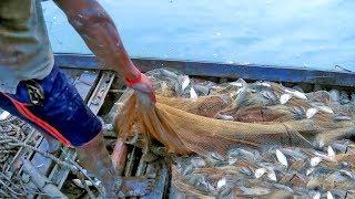 net fishing – fish hunter catching a lot of fish by fishing tools – net fishing video