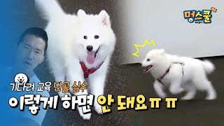 (Samoyed Cloud)Regular mistakes of wait training, you can't do this