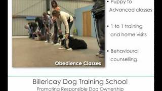 Billericay Dog Training School, Basildon Essex