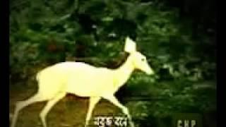 Islamic Carton...Andalusiar Ossharohi...Bangla Islamic Cartoon Film.........