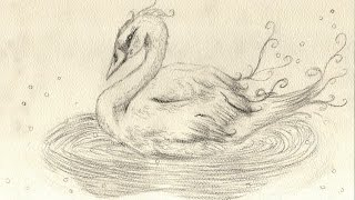 Swan Speed Sketch
