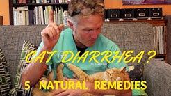 hqdefault - Diabetic Cat With Diarrhea