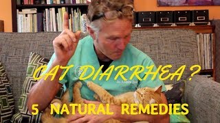 5 Remedies for Cat Diarrhea
