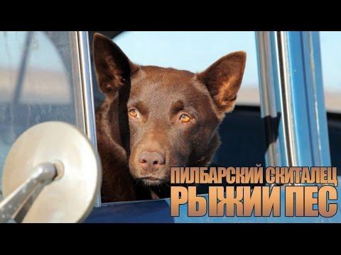 Саундтреки рыжий пес