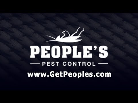 Separating Facts & Myths About Rodent Control | GetPeoples.com
