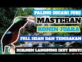 Masteran Kolibri Ninja Juara Paling Dicari Juri  Mp3 - Mp4 Download