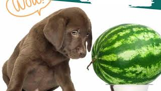 férgekkel ehet görögdinnyét