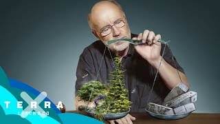 Warum der Hambacher Forst bleiben muss | Harald Lesch