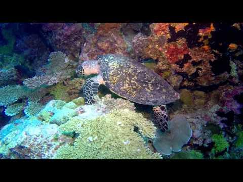 Scuba Diving Palau 2015