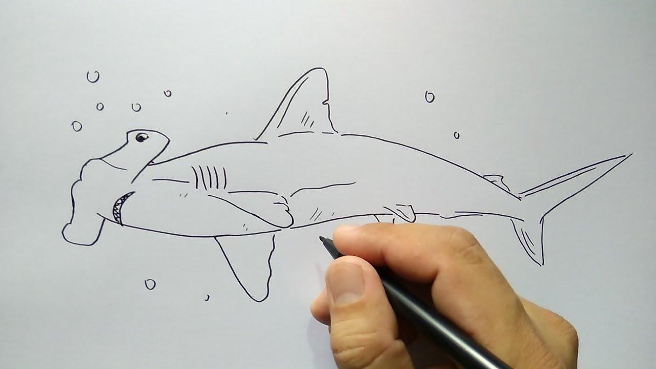 cara menggambar hiu palu - YouTube