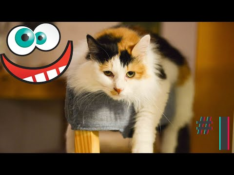 Funny animals compilation cats and dogs fails videos fun moments #1