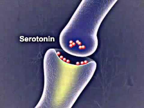 How Do Antidepressants Work ?