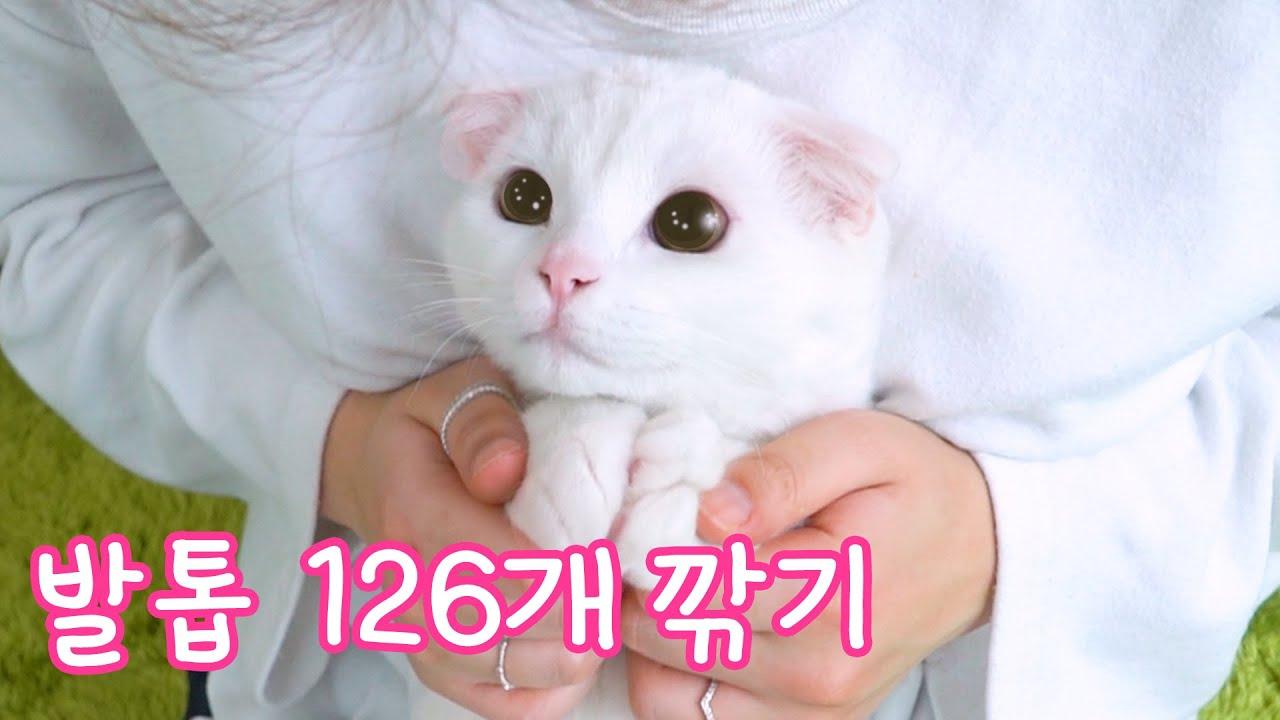 고양이 발톱 126개를 깎아 보았어요 | 고양이산책