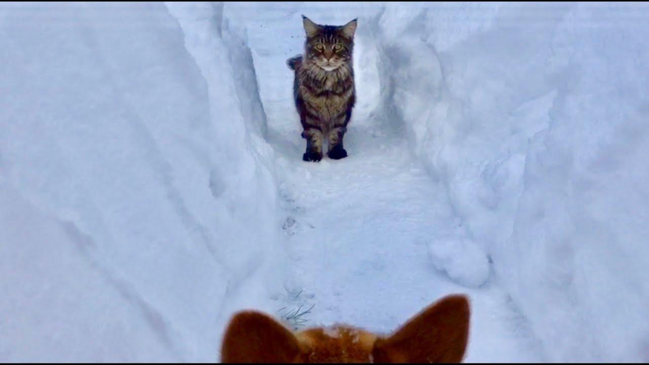 Кот и собака в снежном лабиринте ️ 2 серия ️ - YouTube