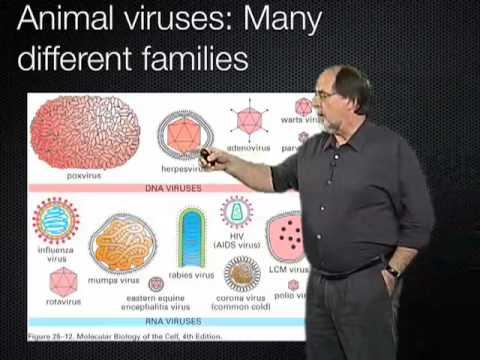 Ari Helenius (ETH Zurich) Part 1: Virus entry