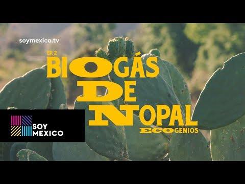 Ecogenios: Biogás de nopal   Capítulo 02   #SoyMéxico