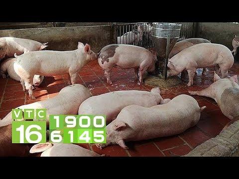 Giá thịt lợn còn tăng cao đến đâu?   VTC16