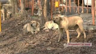 """Видео """"Новости-N"""": В Николаеве появляется все больше стай собак"""