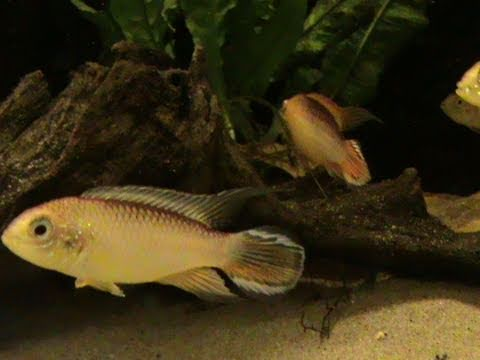 How To Lower PH In An Aquarium - Tips And Advice By Pondguru