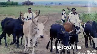 best raya cultural music / ምርጥ የራያ ባህላዊ ሙዚቃ