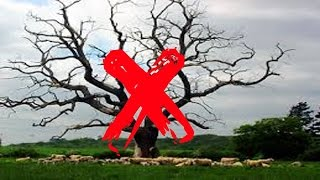 видео Яблоня Боровинка красная