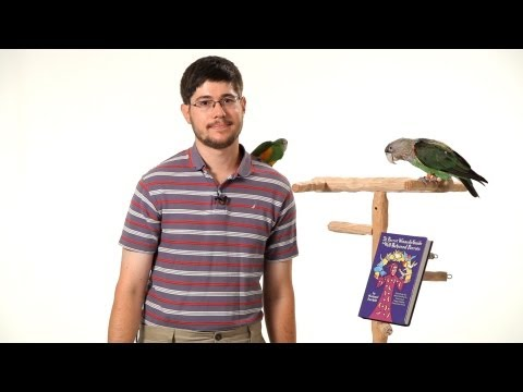 Parrot Training with Michael Sazhin | Parrot Training
