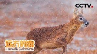 《远方的家》 20190902 盱眙铁山寺国家森林公园 多彩的生态世界| CCTV中文国际