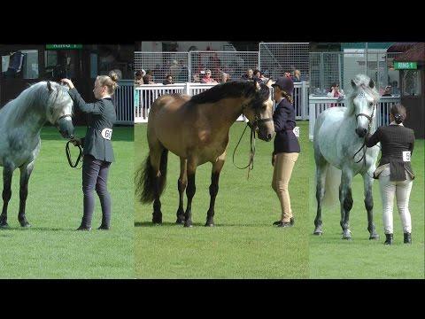 RDS Dublin Horse Show 2016 Connemara Stallion Parade