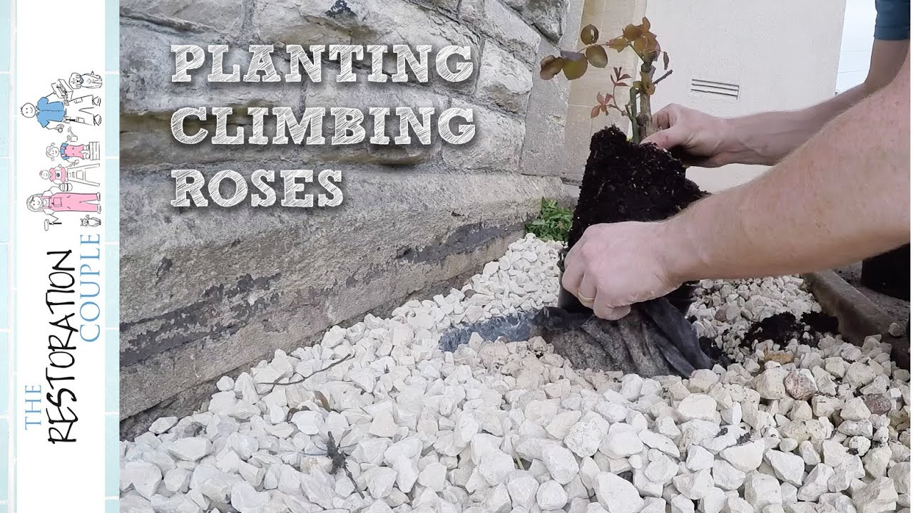 Planting Next To A House Wall And Avoiding Damp Youtube