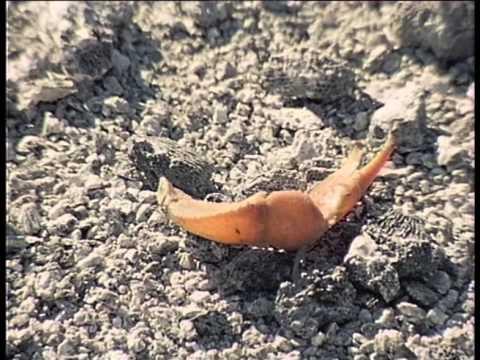 La Collection Cousteau 71/90 - Clipperton île de la solitude (1980)