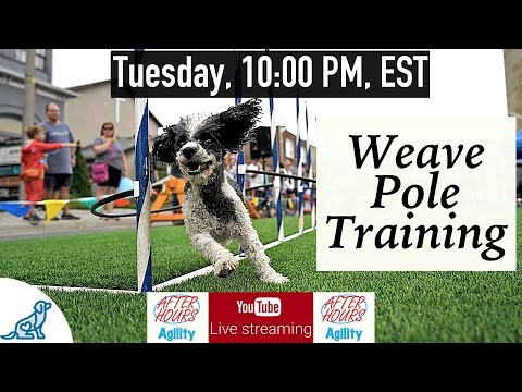Dog Agility Training - Weave Pole Training - Professional Dog Training Tips