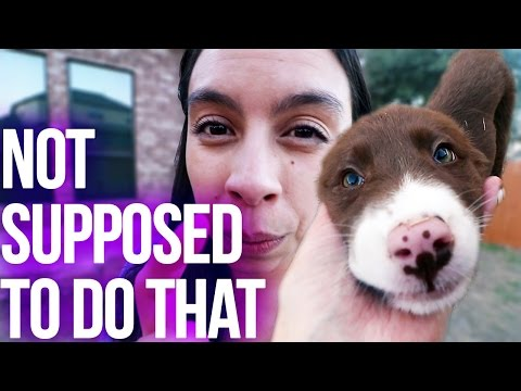 Dog Vlog: You're Not Supposed To Do That